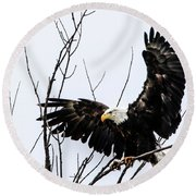 Eagle Tree Top Landing Round Beach Towel by Ray Congrove