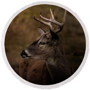 Round Beach Towel featuring the photograph Early Buck by Robert Frederick