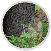 Early Morning Coyote In Maine Round Beach Towel