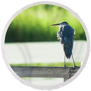 Early Morning Great Blue Heron Round Beach Towel