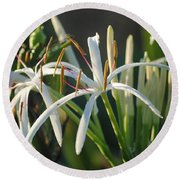 Early Morning Lily Round Beach Towel
