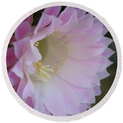 Easter Lily Cactus East Round Beach Towel