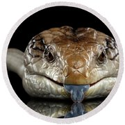 Eastern Blue-tongued Skink, Tiliqua Scincoides, Isolated On Black Background Round Beach Towel by Sergey Taran