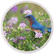 Eastern Bluebird - D010120 Round Beach Towel