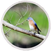 Round Beach Towel featuring the photograph Eastern Bluebird by George Randy Bass