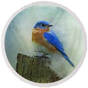 Eastern Bluebird II Round Beach Towel by Sandy Keeton