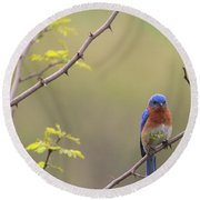 Eastern Bluebird Round Beach Towel by Living Color Photography Lorraine Lynch
