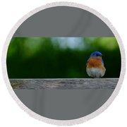 Eastern Bluebird - Male Round Beach Towel