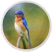 Round Beach Towel featuring the photograph Eastern Bluebird Painted Effect by Heidi Hermes