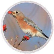 Eastern Bluebird With Berry Round Beach Towel