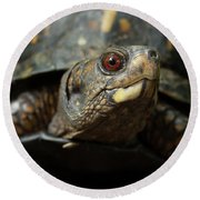 Eastern Box Turtle 4 Round Beach Towel