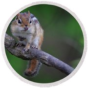 Round Beach Towel featuring the photograph Eastern Chipmunk by Gary Hall