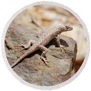 Eastern Fence Lizard, Sceloporus Undulatus Round Beach Towel