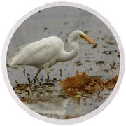 Eastern Great Egret 10 Round Beach Towel
