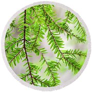 Round Beach Towel featuring the photograph Eastern Hemlock Tree Abstract by Christina Rollo