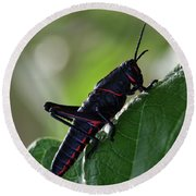 Eastern Lubber Grasshopper Round Beach Towel by Richard Rizzo