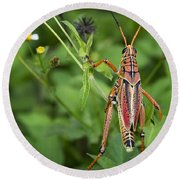 Eastern Lubber Grasshopper  Round Beach Towel by Saija  Lehtonen