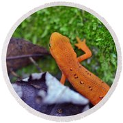 Eastern Newt Round Beach Towel by David Rucker