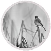 Eastern Phoebe 2017 Round Beach Towel by Thomas Young