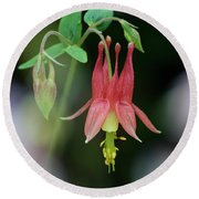 Eastern Red Columbine - D010104 Round Beach Towel