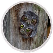Eastern Screech Owl Chicks Round Beach Towel