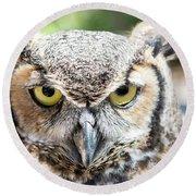 Eastern Screech Owl Portrait Round Beach Towel
