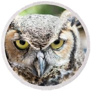 Eastern Screech Owl Portrait Round Beach Towel