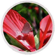 Eastern Tailed Blue Butterfly On Red Flower Round Beach Towel