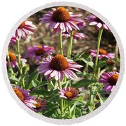 Echinacea Round Beach Towel by Cynthia Powell