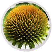 Round Beach Towel featuring the photograph Echinacea - Head And Shoulders by Wendy Wilton