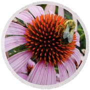 Echinacea Tea Time For Bee Round Beach Towel