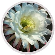echinopsis candicans - The Argentine Giant  Round Beach Towel