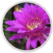 Round Beach Towel featuring the photograph Echinopsis In Hot Pink  by Saija Lehtonen