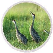 Sandhill Cranes In A Misty Meadow  Round Beach Towel