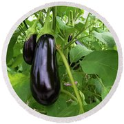Eggplant In A Greenhouse Round Beach Towel