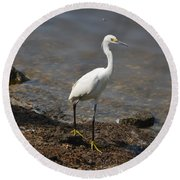 Egret 1 Round Beach Towel