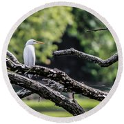 Egret Able Round Beach Towel