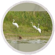 Round Beach Towel featuring the photograph Egret Family 1 by Maria Urso