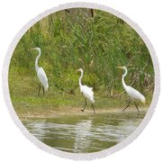 Round Beach Towel featuring the photograph Egret Family 2 by Maria Urso