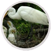 Majestic Great White Egret Family Round Beach Towel by Bob Christopher