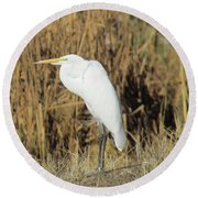 Egret In Grass Round Beach Towel