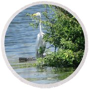Great Egret In The Marsh Round Beach Towel
