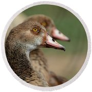Egyptian Geese Duo Round Beach Towel