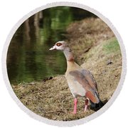 Egyptian Goose By Pond Round Beach Towel