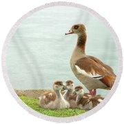 Egyptian Goose Lakeside With Goslings Round Beach Towel