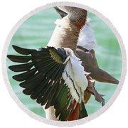 Egyptian Goose Stretch  Round Beach Towel