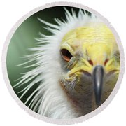 Egyptian Vulture Round Beach Towel by David Stasiak