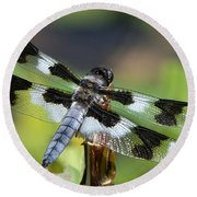 Eight-spotted Skimmer  Round Beach Towel