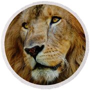 Round Beach Towel featuring the photograph El Rey by Skip Hunt