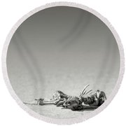 Eland Skeleton In Desert Round Beach Towel